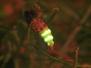 Glühwürmchen 2014