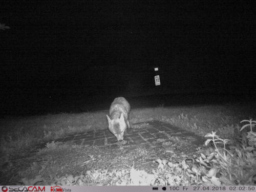 wild-20180427-02 02-0042